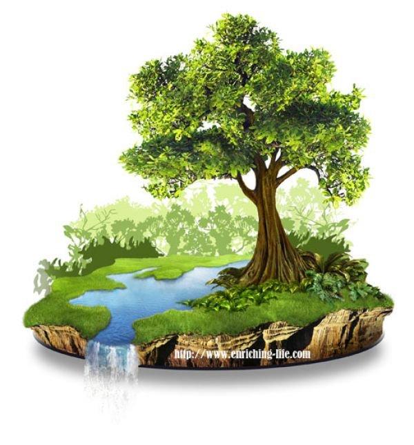 ketika pohon hanyalah hiasan ruangan tema minggu wm